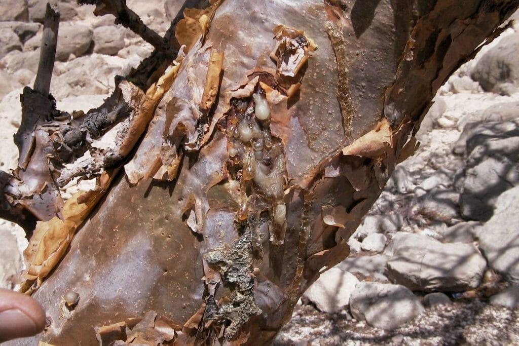 Inkeping Boswellia Boom